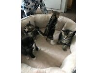 Kittens looking for loving home