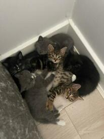 Cutest kittens ready to leave now
