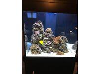 Aqua One 275 Marine or Freshwater Tropical Aquarium