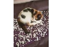 Kitten n bundle must go today