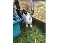 Rabbits / Bunnies