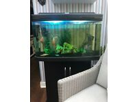 Fish tank for sale with or with out fish, fish can be sold separately