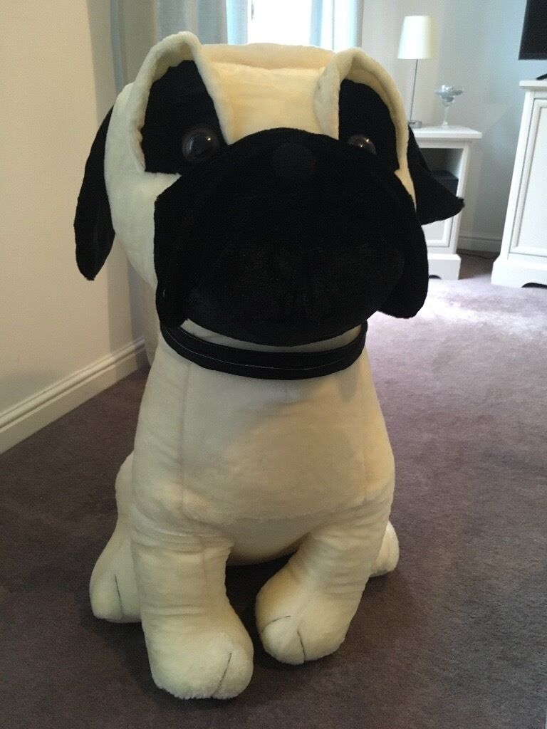 Giant Pug Teddy In Coalville Leicestershire Gumtree