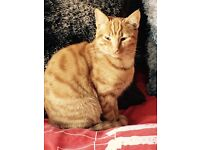 I have Kittens ginger Persian very beautiful and friendly microchipped and vaccinated