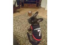France dog/puppy football t shirt