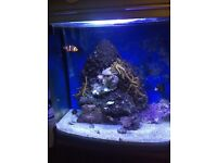 Marine aquarium. Full set up fish tank