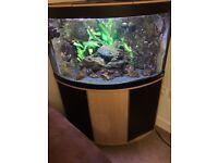 Fluval Venezia 190ltr aquarium