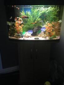 Tropical tank + fish