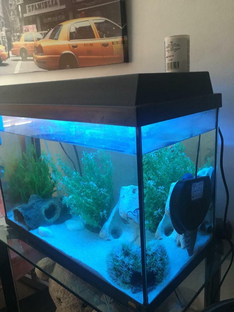Juwel aquarium fish tank - Juwel Aquarium Fish Tank
