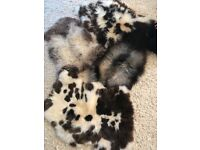 Rare breeds sheepskins, individual price £50. New and unused, natural rug, carpets,