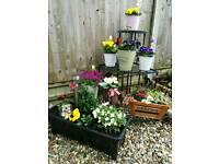 Planters/troughs for sale