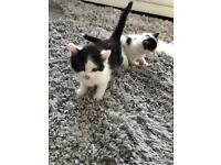 3 gorgeous kittens looking for forever homes