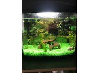 Full fish tank set up 58l