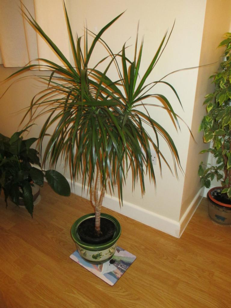 Healthy House Plants Purchase Sale And Exchange Ads