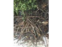 Branches / kindling