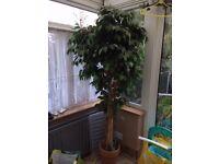 5ft Tree Fake