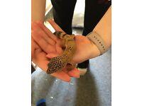 Male Leopard Gecko For Sale