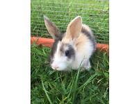 2 boys left baby rabbits Dutch