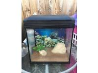 40 litre Fish tank with filter and ornaments