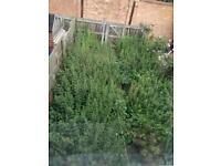 Garden Maintenance & Handyman Service