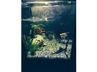 Aqua one 55lt fish tank