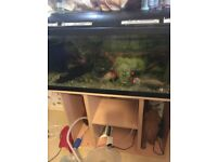 180L fish tank and stand for sale