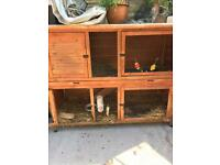 Large rabbit hutch, 2 lop rabbits and accessories.