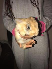 Bunnies for SALE !!!