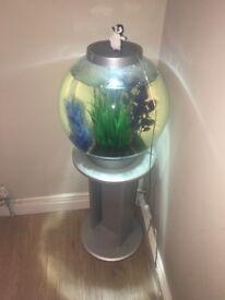 Bi orb fish tank full set up