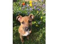 Stuffy puppy needs rehoming