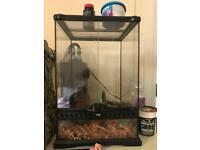 Large exo Terra vivarium with 2 mourning geckos