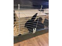 Indoor Rabbit free to good home
