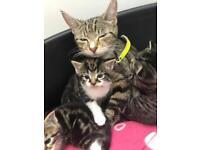 X rag doll kittens