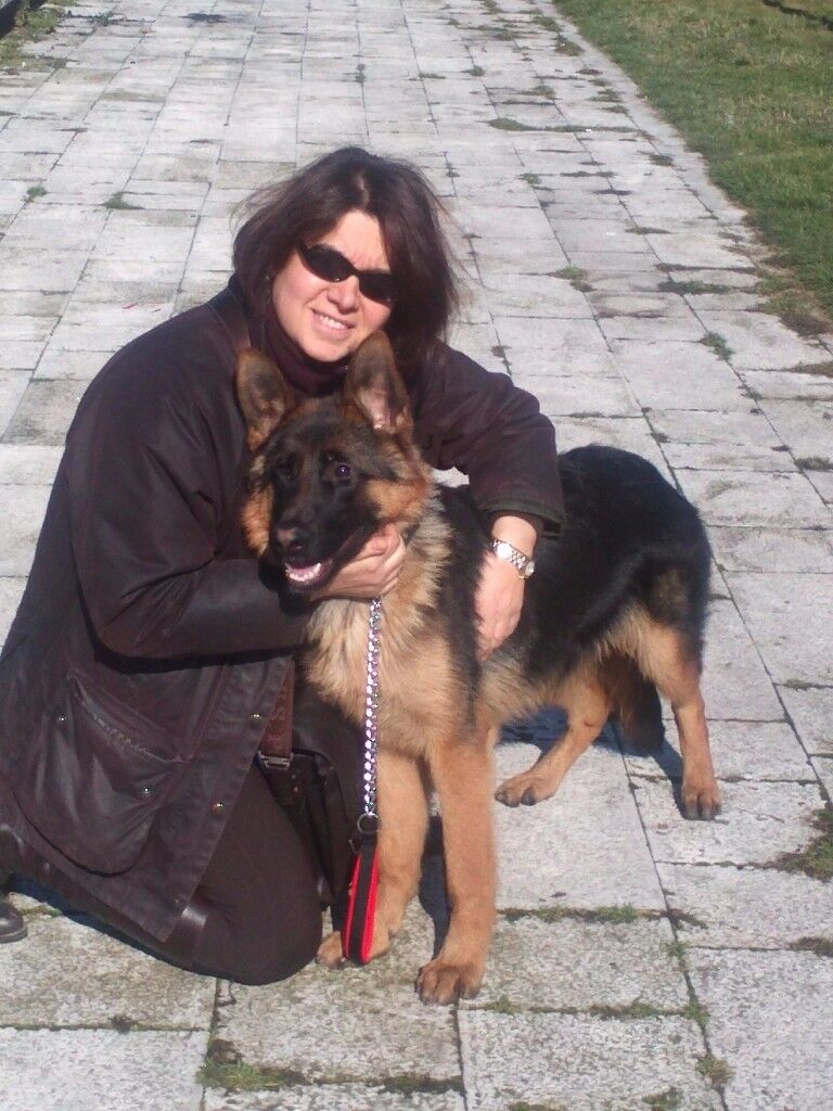Puppy and Dog Training & 1:1 Consultation from a qualifield and fully insured Dog Trainer