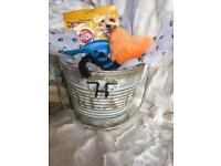 Shabby Chic treat tin for small dogs.