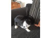 Friendly girl rabbit