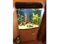 For swaps 130litre Aqua one 620t fish tank