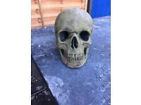 Stone skull Garden Ornament