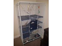 Husky dumbo rats with cage