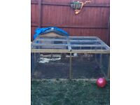 Guinea Pigs and outdoor cage