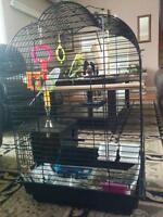 2 Budgies and big cage $80