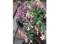 summer plant