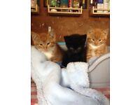 Friendly yard kittens
