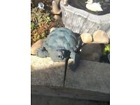 Pond water features frog and turtle spitter. pumps not included.
