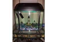 Fish Tank and Full setup.