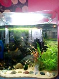 Cold/tropical fish for sale