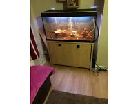 Only 6 months old large fishtank (everything incl)
