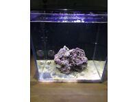 Marine tank with complete set up coral salt water slimmer led lid!