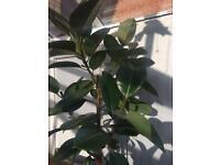 Plants 🌱