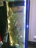 Established marine tank for sale